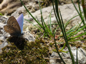 Papillon dans un canyon